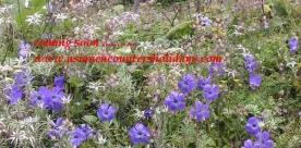 Simikot to Mt Kailash
