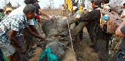 Successfull translocation of One Horned Rhinos in Nepal